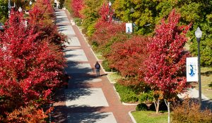 Photo of College Avenue in the fall