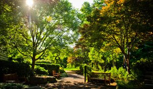 Photo of trees, foliage and benching in the Herring Garden