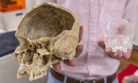Junior Cory Henderson compares a modern human skull with its smaller 3-D printed model.