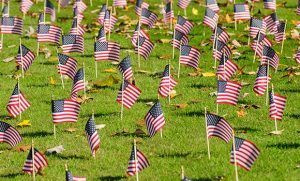 photo of Vetrans Day flags on the lawn of Kaplan Commons