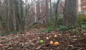 Photo of apples placed in the woods at the School of Music, Theatre and Dance