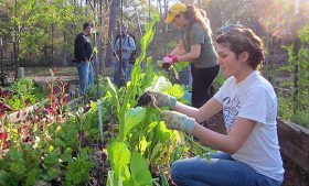 Photo of students working in a garden during a spring break service trip.