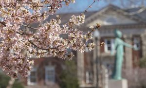 Photo of tree blooming on campus with Minerva statue in background