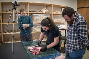 Photo of students cutting deer meet with stone tool; professor is standing and observing