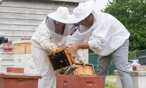 Photo of bee keepers working with bees