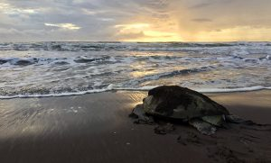 Photo of sea turtle on the shore