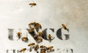 Photo of bees crawling on UNCG letters