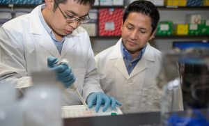 Photo of professor and postdoctoral fellow in biology lab