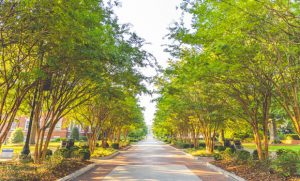 Trees around a road