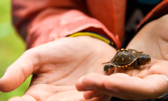 a tiny turtle in a hand