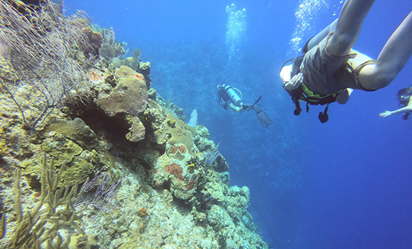 Photo of divers exploring coral reef