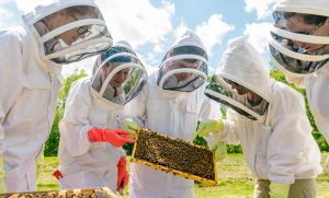 bee researchers with bees