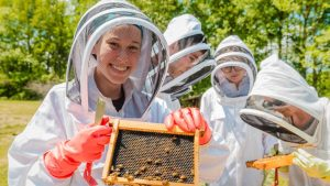 a beekeeper with a flat of bees