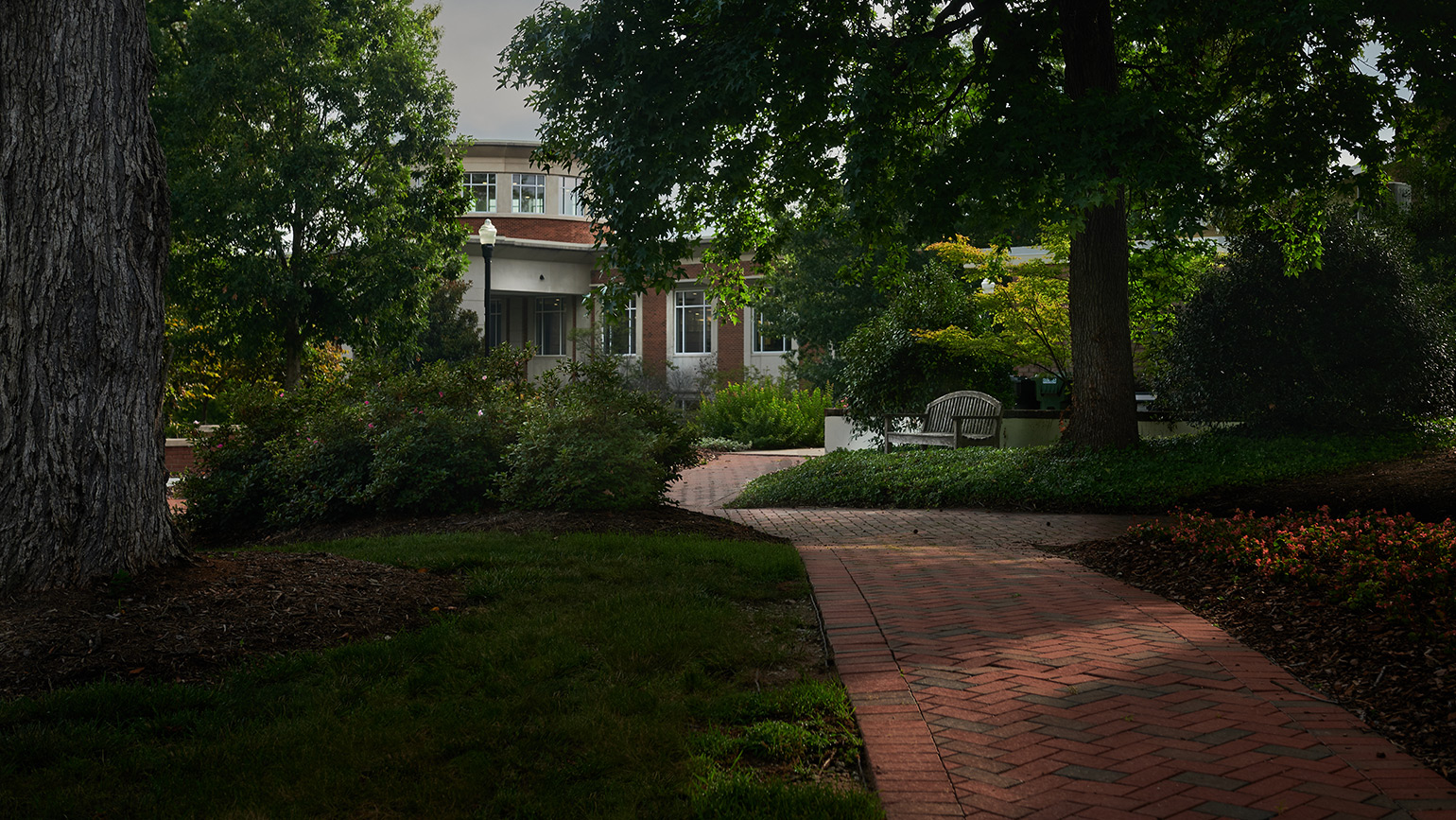 Photo of path and trees on campus with building in background