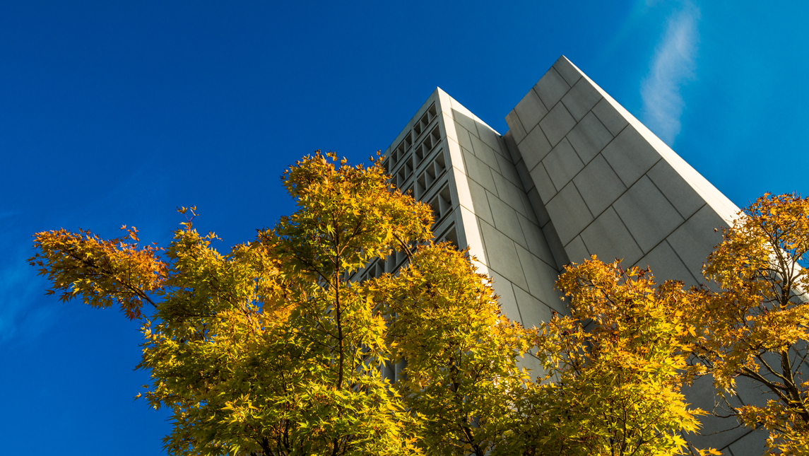 building and fall leaves