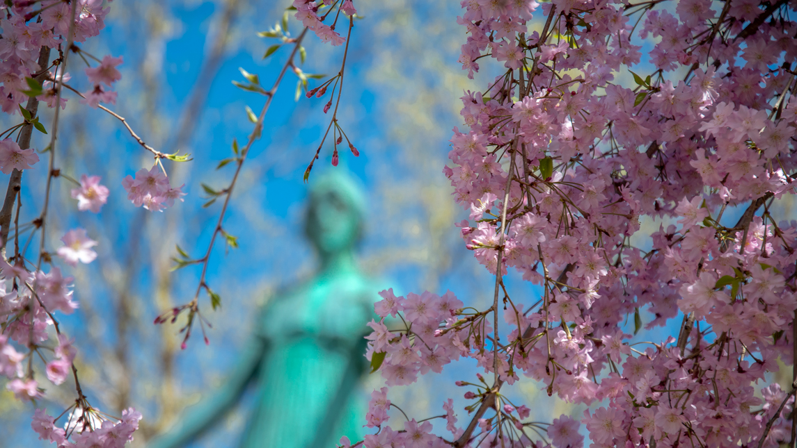 blooming trees framing statue