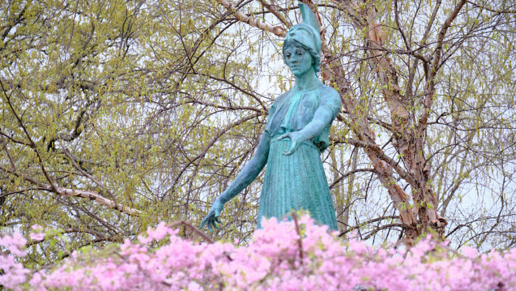blossoms and statue