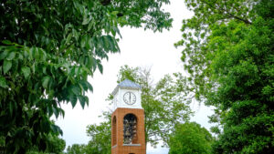 trees and a bell tower